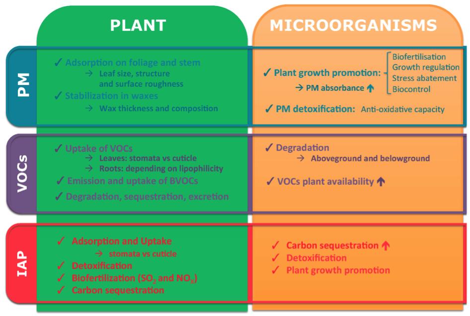 Microorganismen rond planten