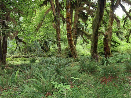 Het bos komt naar mij. Marjolein Bezemer