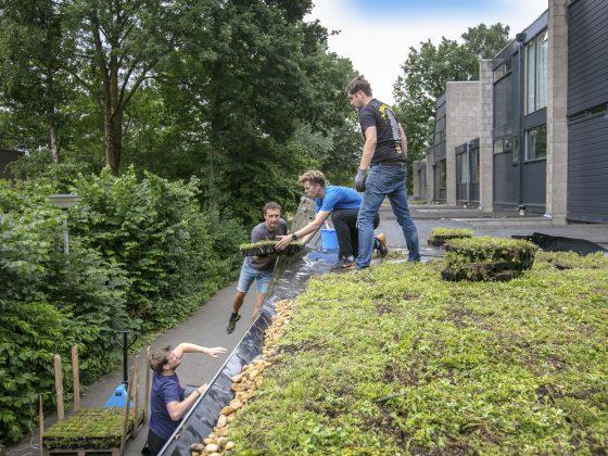 Buurtinitiatief groene daken in Kattenbosch