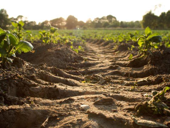 Vitale bodem essentieel voor klimaatadaptatie
