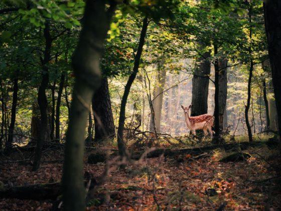 Siska Vrijburg, wandelende bossen ARK Natuurontwikkeling